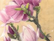 Magnolien 1